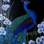 Peacock Moraea Iris