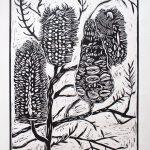 Ltd Ed Banksia Lino cut print