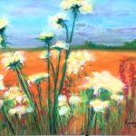 Summertime Field of dreams