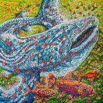 Lucy the Whale Shark and Friends