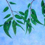 Botanical 4 Gum Leaves