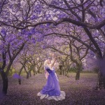 Dance of the Jacarandas – 10×12″ Ltd Ed Print