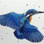 Kingfisher Kraze #4