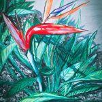 SOLO-BIRD OF PARADISE