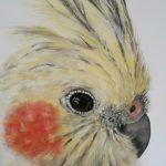 Soranidoo – Cockatiel Painting