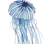 Compass Jellyfish Ltd Ed Print