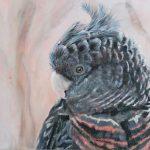 gang gang cockatoo print – Paula