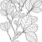Ltd Ed Print Wild Prune – Pouteria Sericea