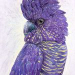 Violet Crumble (Ltd Ed Print)