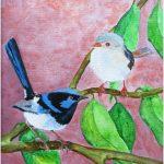 Blue Fairy Wren Couple
