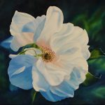 FRENCH BEAUTY  Rugosa Rose Ltd Ed Print