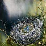 I am Nest and I am Art