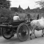 Farmer with Oxcart Pano, Old Bagan, Myanmar – Ltd Ed Print
