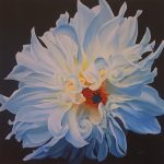 SUNLIT BEAUTY, DAHLIA, Giclee on Canvas