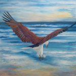 FISHING – WHITE-BELLIED SEA-EAGLE