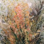 SUMMER GLORY – Flowering Grevillea