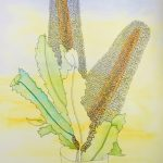 Ode to a Banksia